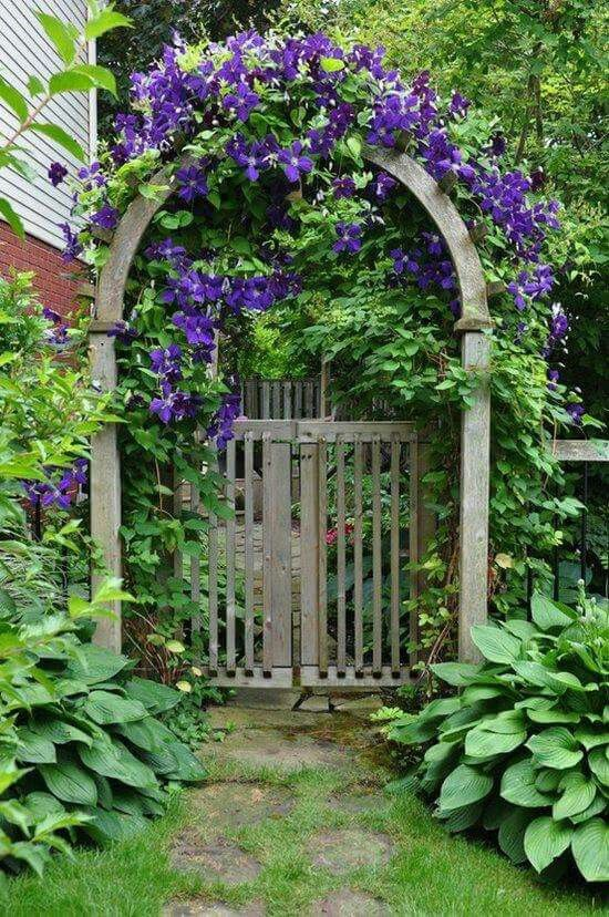 Trellis For Clematis Ideas Part - 40: Large-leafed Hostas Sit At The Feet Of An Arched-top Arbor That Frames The  Gate. Lovely Purple Clematis Climbs Over The Arch.