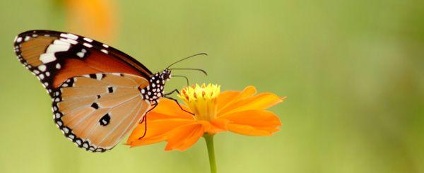 https://www.botanic.com/sites/botanic_sv/fichiers/conseils/papillon.jpg