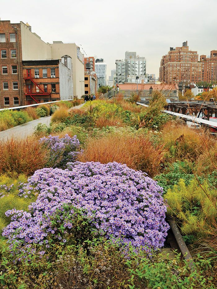 Oudolf High Line New York Ny