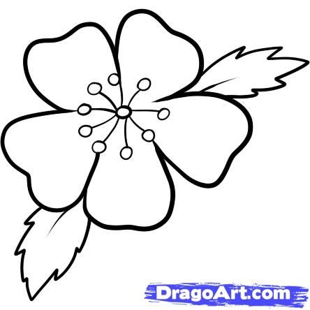Easy To Draw Cherry Blossoms How To Draw A Cherry Blossom Step 7 Flower Drawing Drawings Cherry Blossom