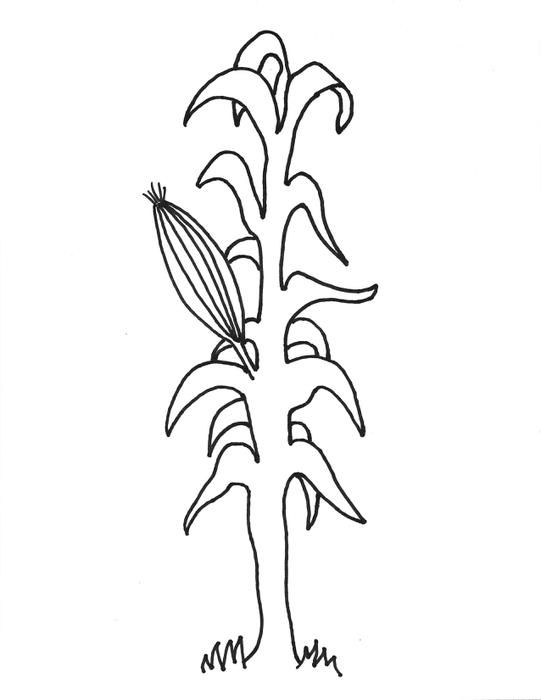 Pumpkins And Corn Stalks Coloring Page Fall Coloring Pages
