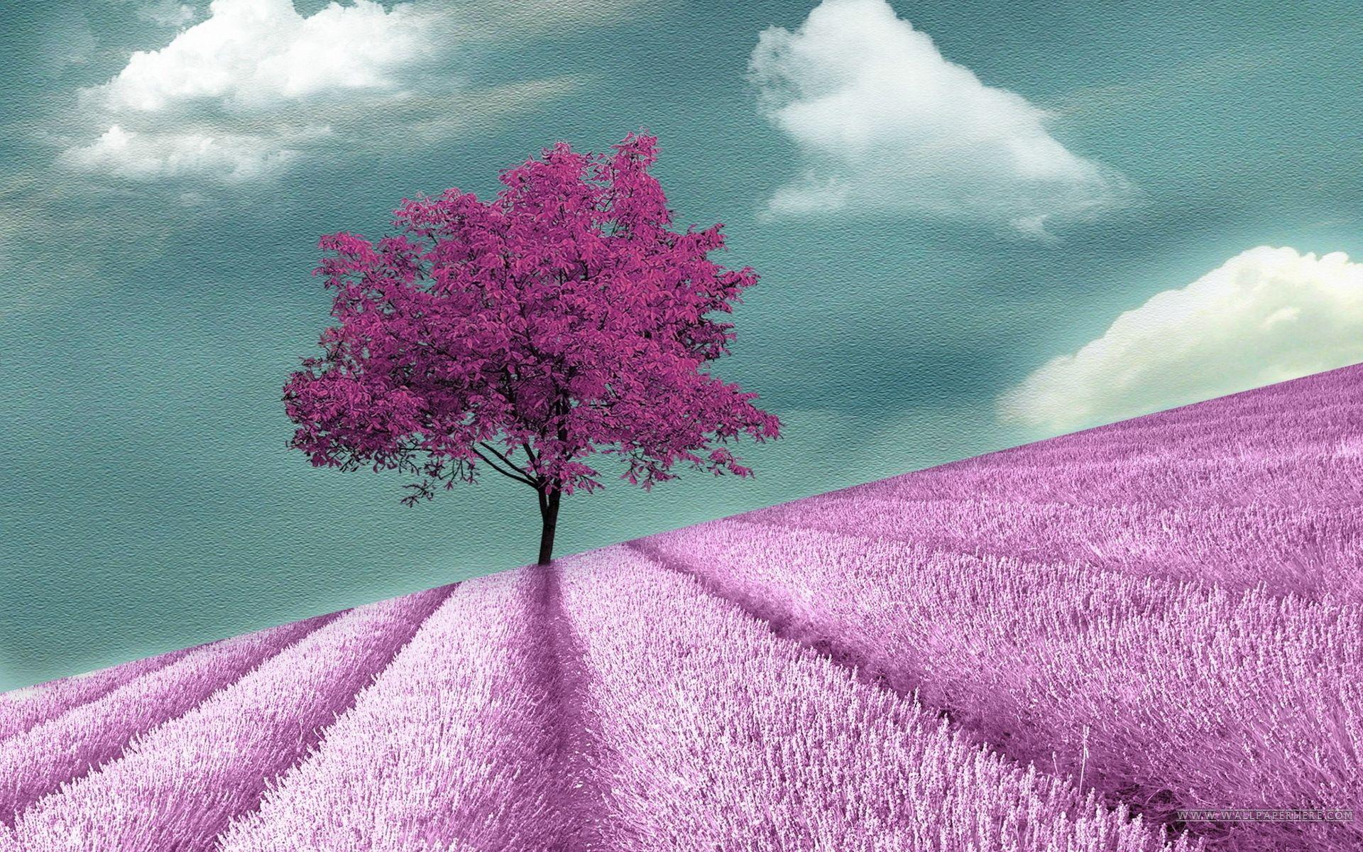 Purple Trees Full Hd Desktop High Definition Wallpapers Field Wallpaper Purple Trees Tree Wallpaper
