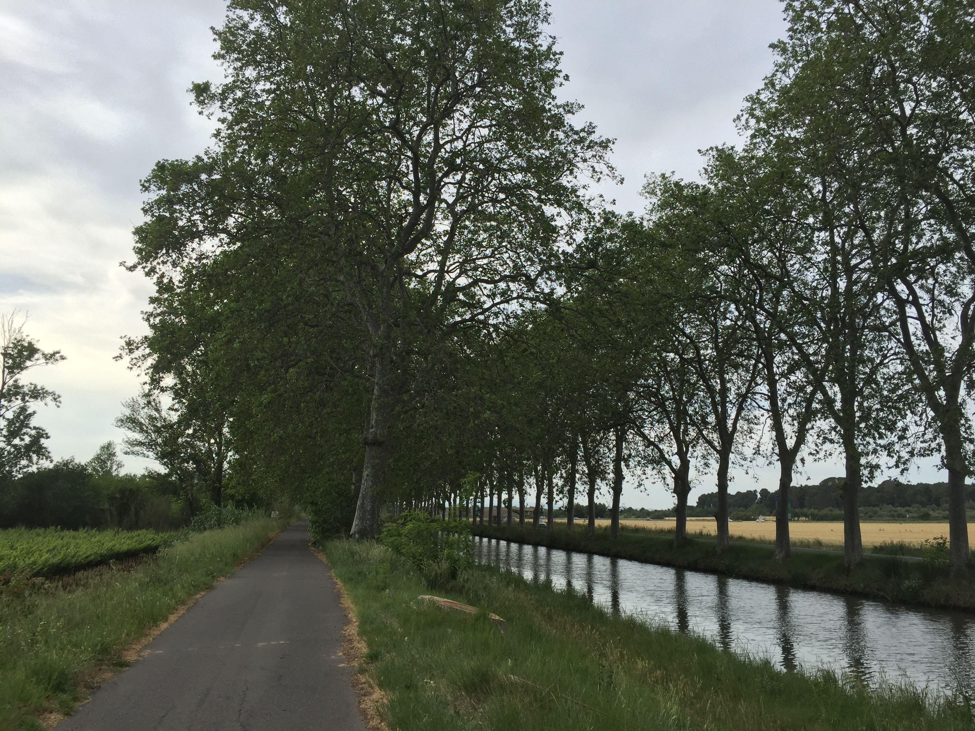 2016-Mai les marais de Portiragne, le long du Canal du Midi. Photo de Colette Hofmans