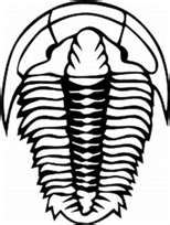 Trilobite Line Art Trilobite Tattoo Trilobite Icon Tattoo