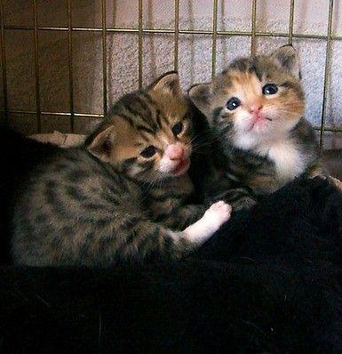 Rescued Kittens Belle And Sebastian