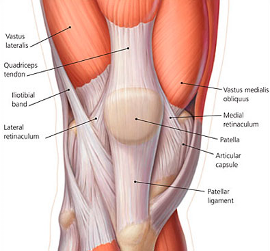 quadriceps tendon, patellar ligament | Massage/Anatomy | Pinterest ...