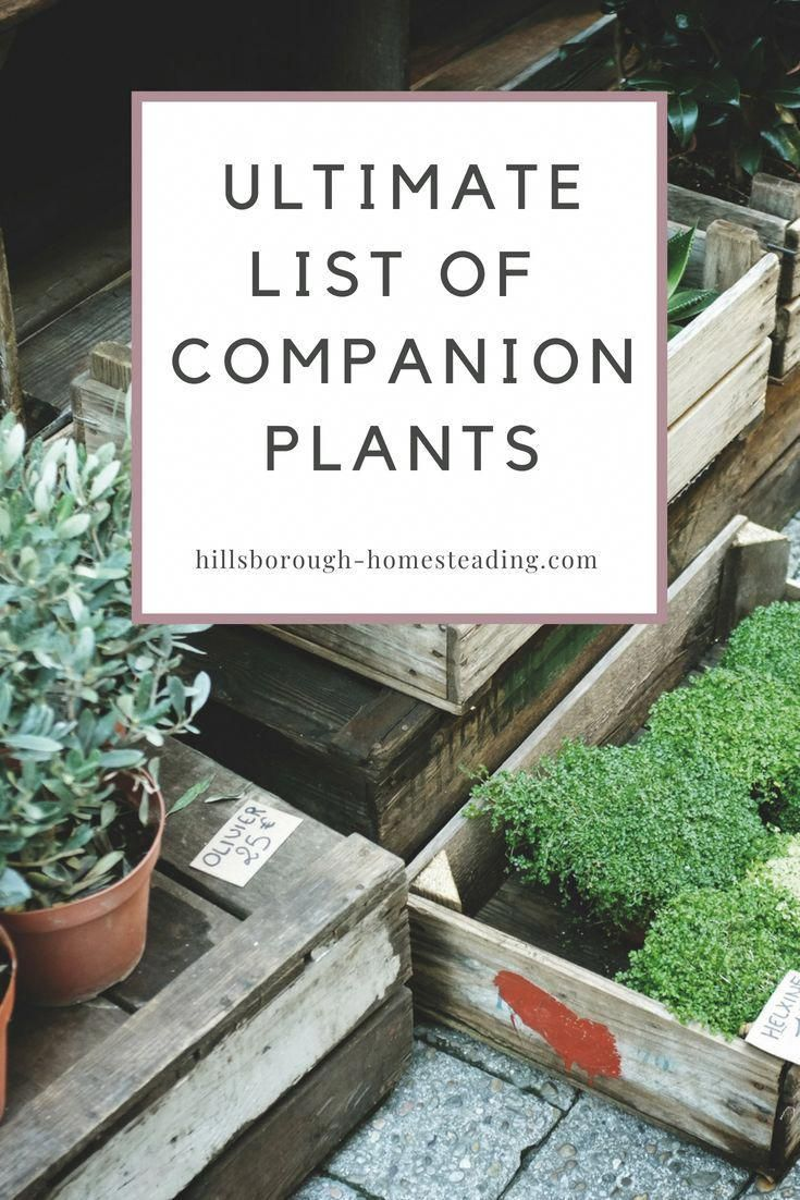 Intimidated by Companion Planting This long list of companion plants explains exactly what they are and how to use them to get the most out of your garden this year  Hill...