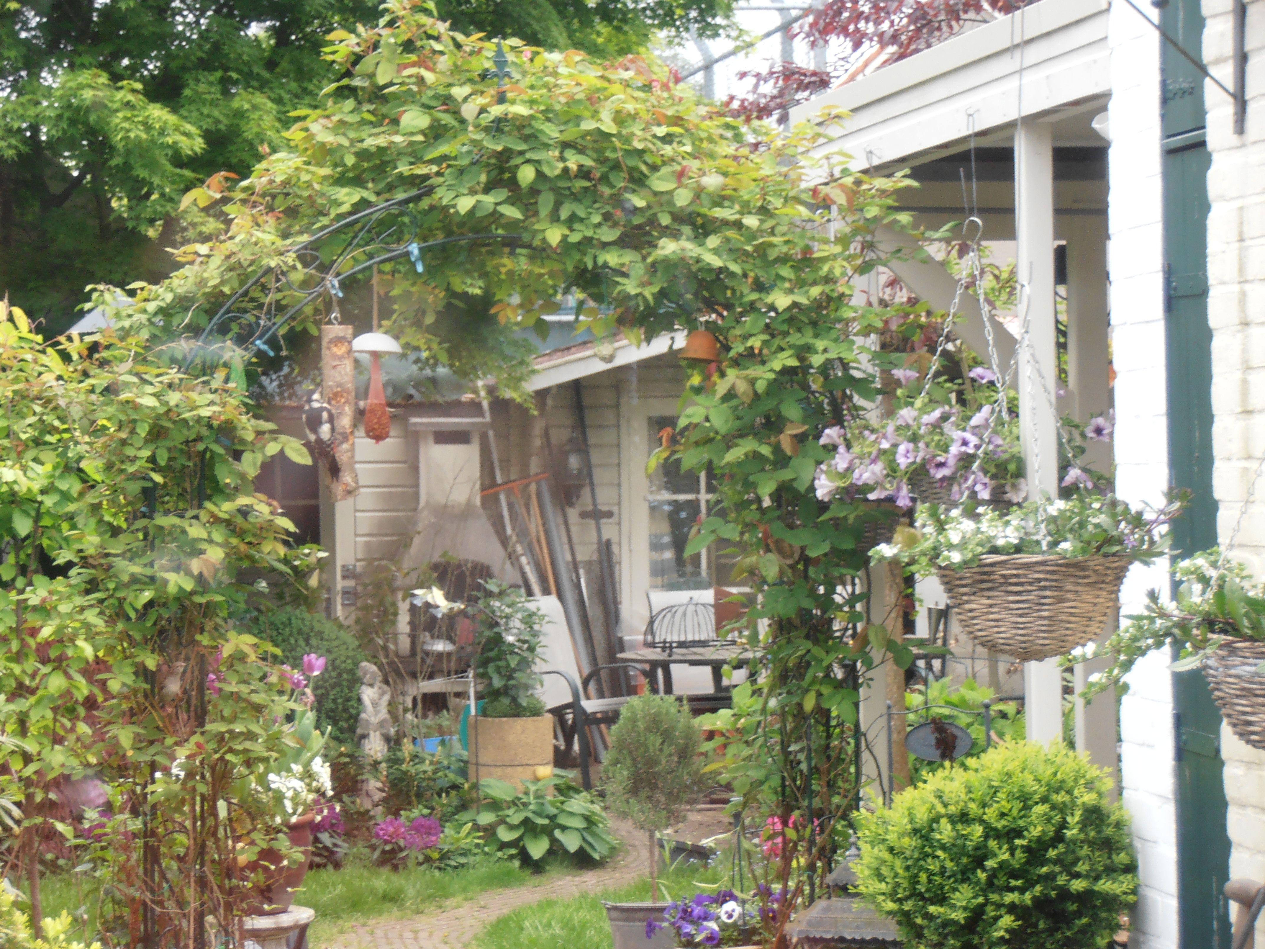 Begroeide pergola of rozenboog voor het terras tuinhuis dromen pinterest gardens - Smeedijzeren pergolas voor terras ...