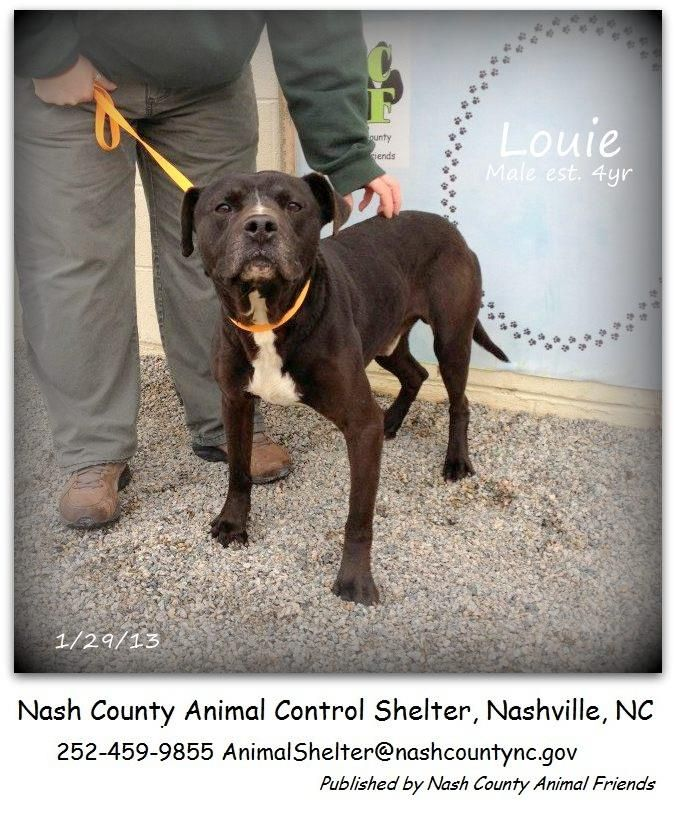 Louie Rescued! Dog sounds