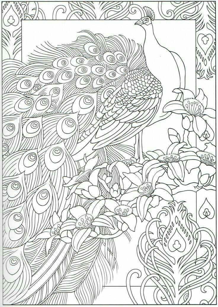 pin von katrina sams auf coloring pages  vogel