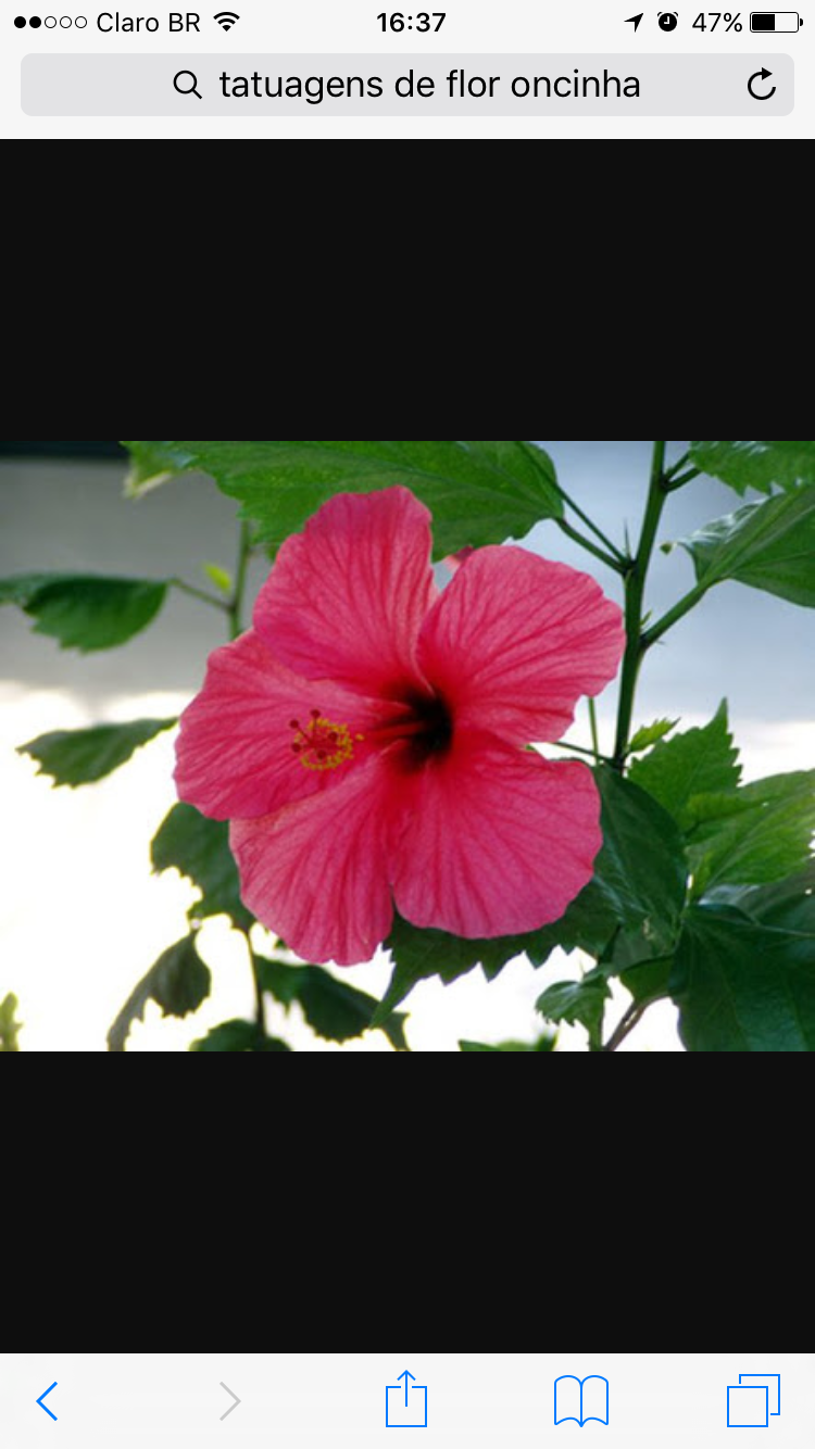 Pin by flavia domingues on pinturas pinterest explore hibiscus plant tattoo pics and more izmirmasajfo Gallery