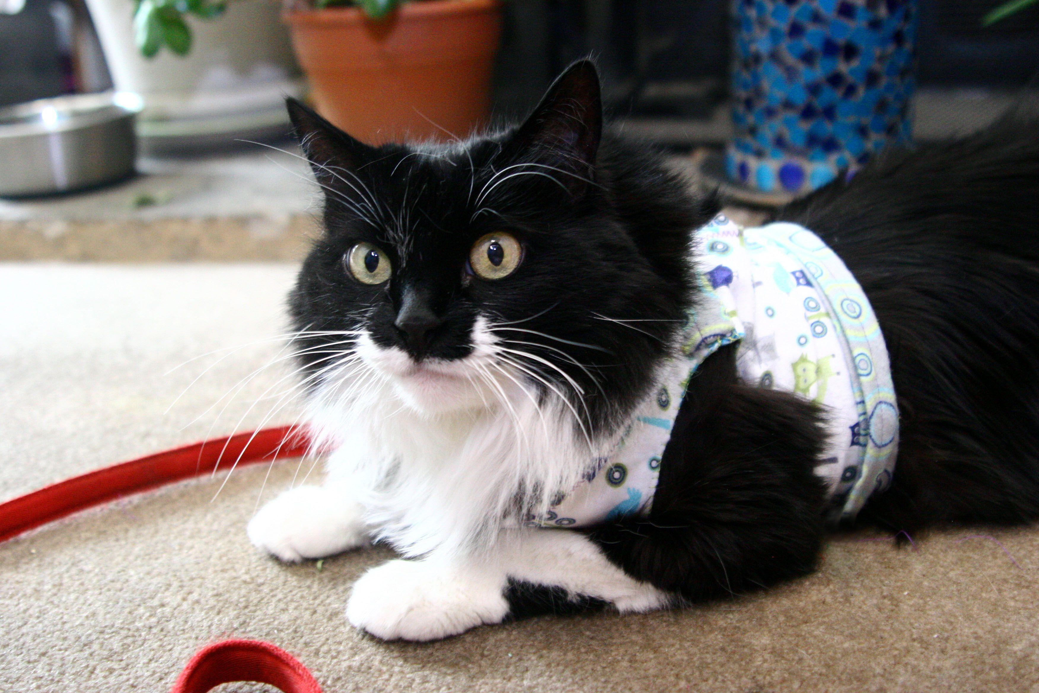 Homemade Cat Harness Cuteness Cat Harness Cats Cat Love