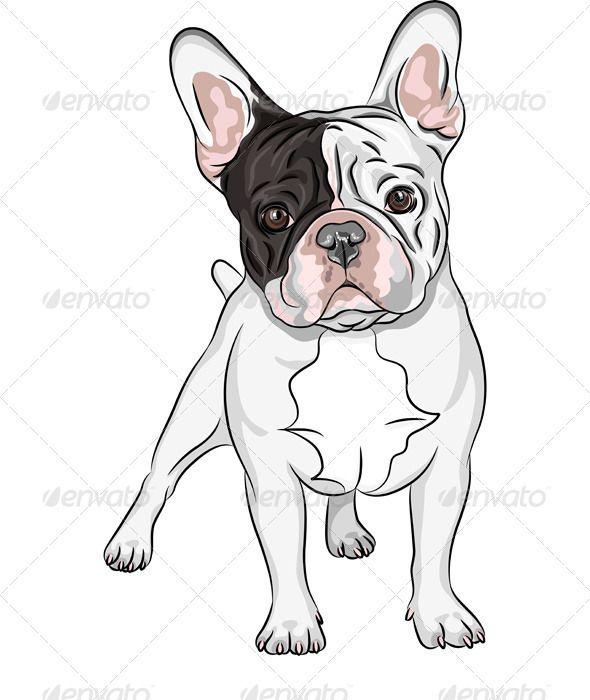 Vector sketch domestic dog french bulldog breed boulis - Bulldog dessin anime ...