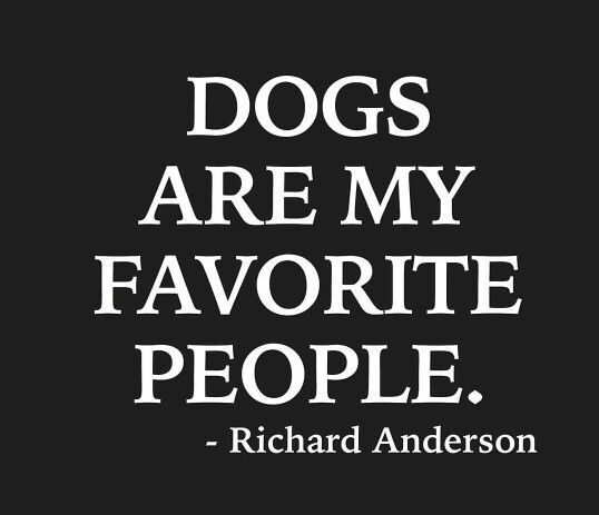 Dogs Are My Favorite People Dog Quotes Words Animal Quotes