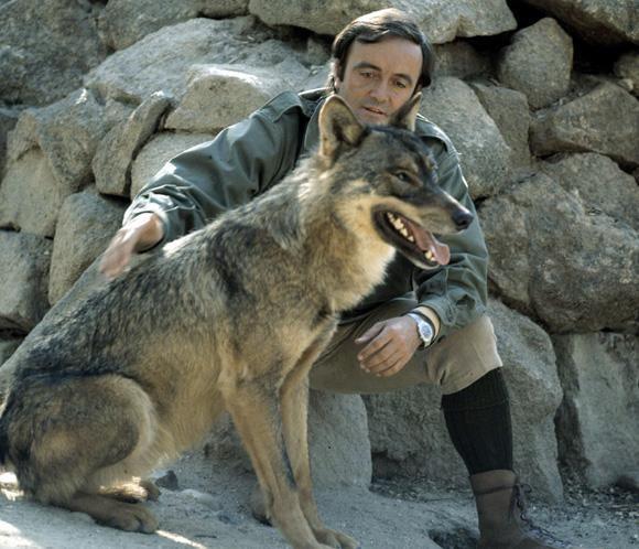 El Lobo Solitario Página 5 Lobo Iberico Felix Rodriguez