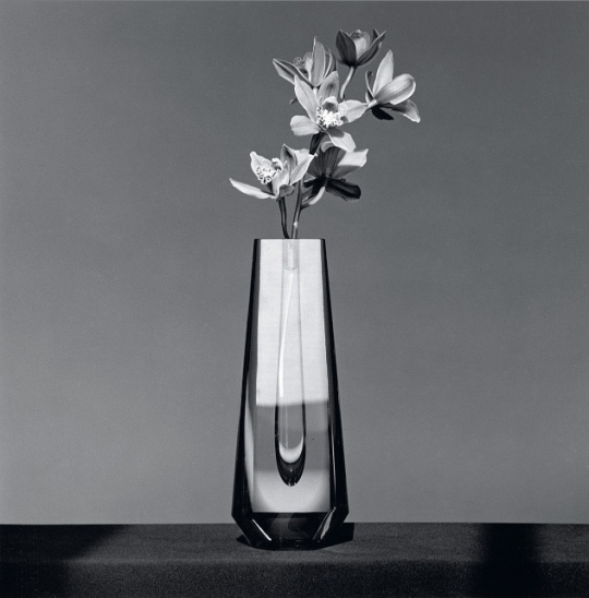 Robert Mapplethorpe; Orchid, 1982