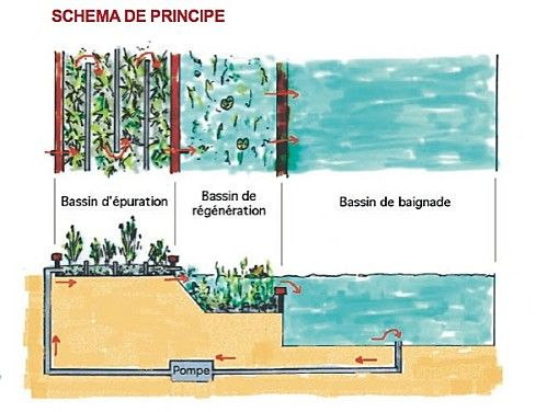 Le principe de la piscine naturelle r ves pinterest for Principe filtration piscine