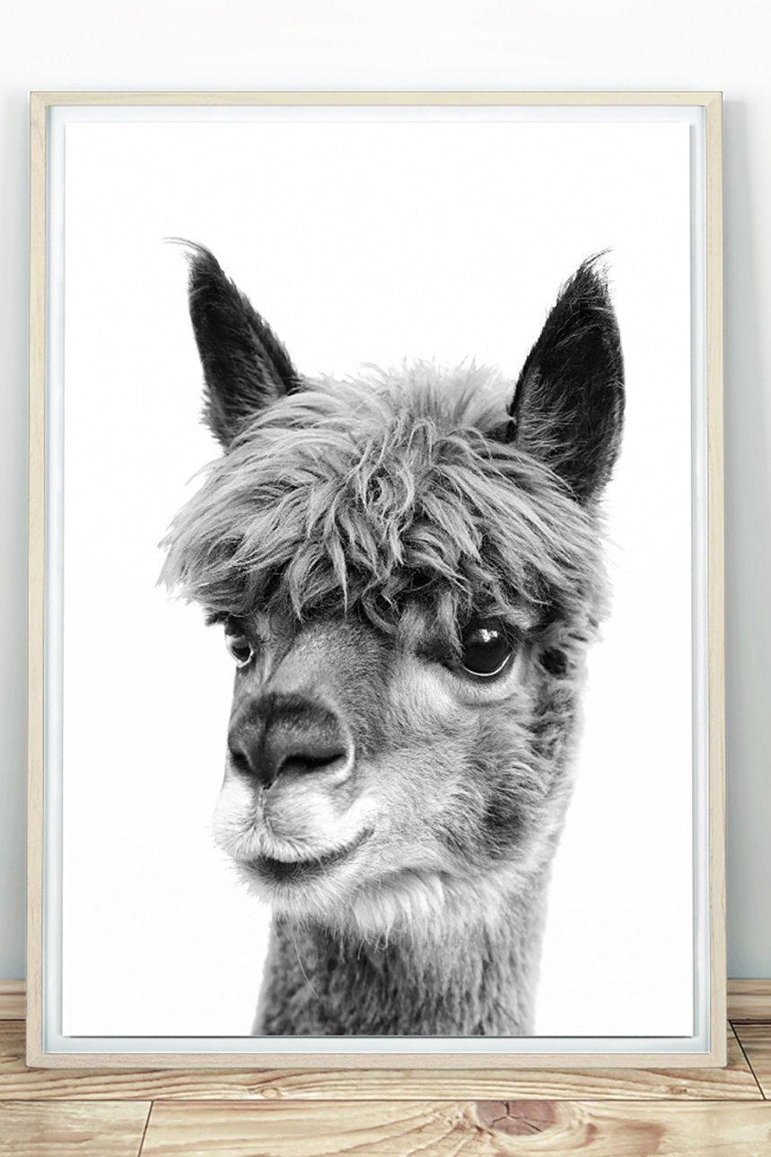 Alpaca Print Black And White Baby Alpaca Poster Animal Etsy Nursery Animal Prints Animals Black And White Llama Decor