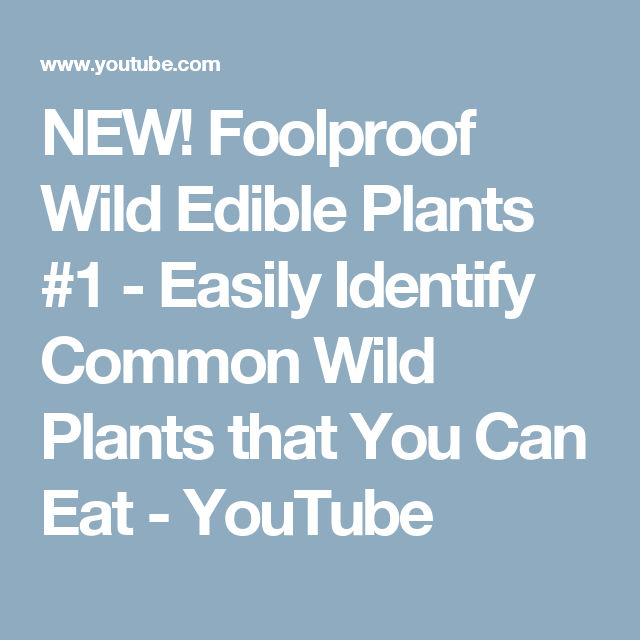 NEW! Foolproof Wild Edible Plants #1 - Easily Identify Common Wild Plants that You Can Eat - YouTube