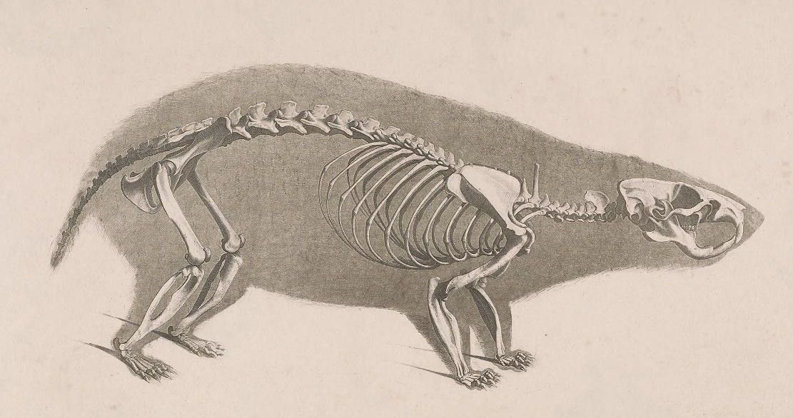 Скелет человека фото с описанием костей