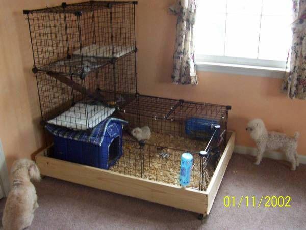 Home made guinea pig cage photos pampered pets for Homemade guinea pig