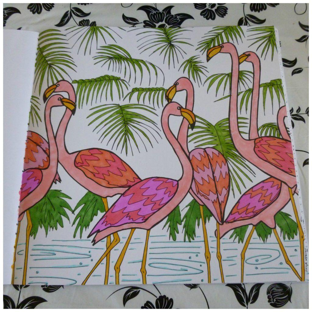 Tropisch Regenwoud Kleurboek Recensie Kleurboek Regenwouden Tropisch