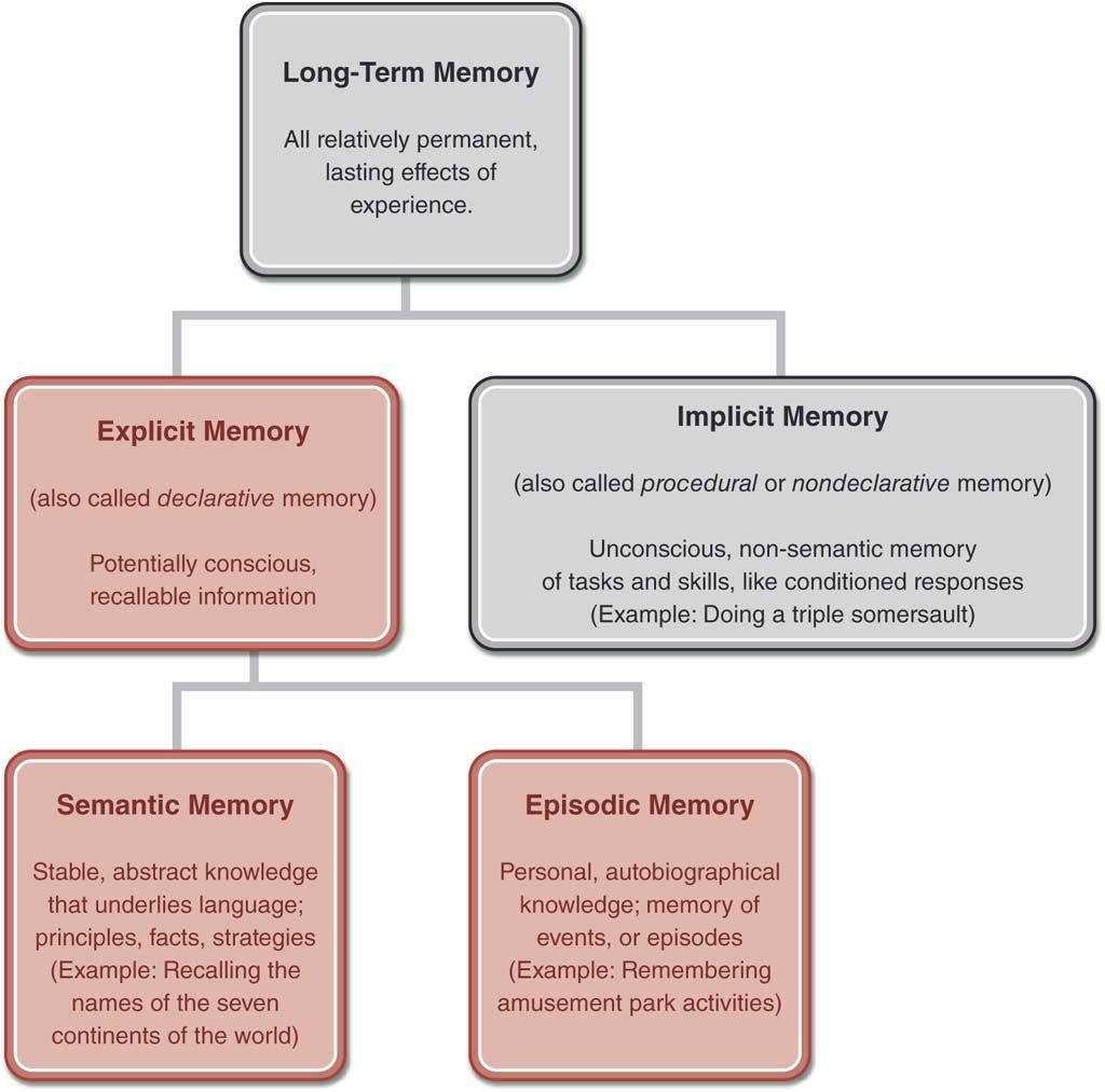 Flow Chart Showing The Components Of Long Term Memory At