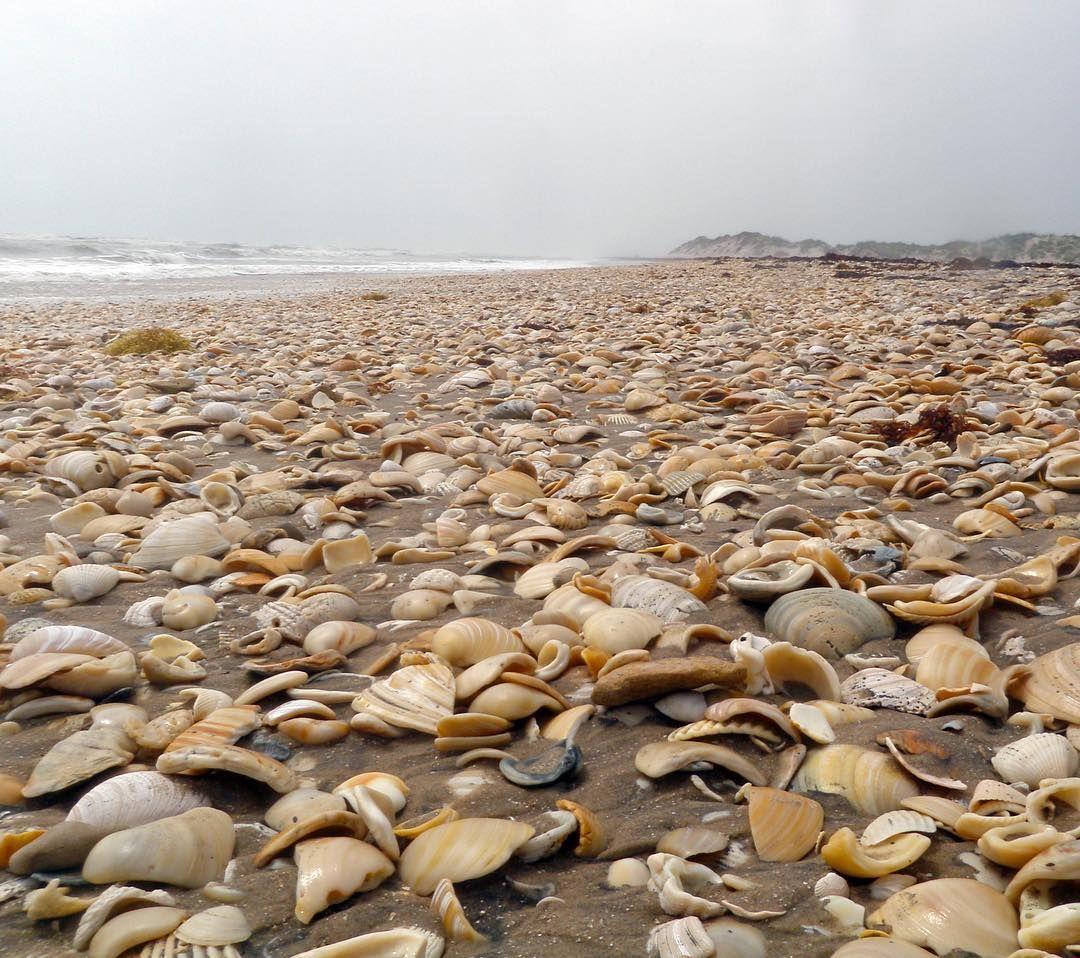 Ever Wonder How Shell Beach Got Its