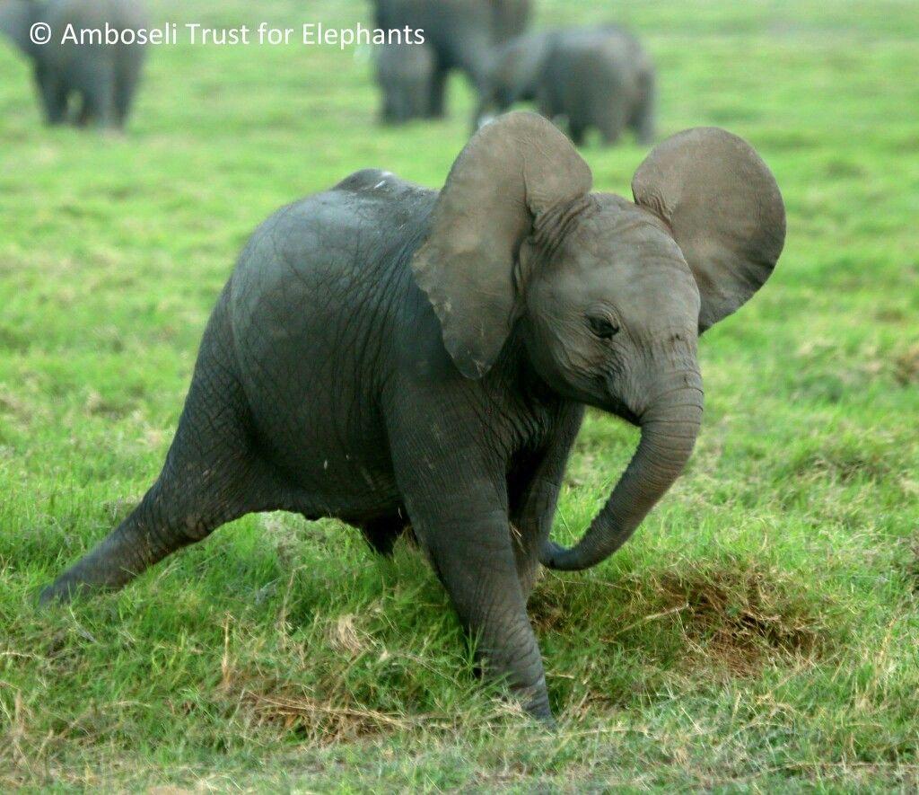 Pin By Suzanne Karikomi On Wild African Elephants