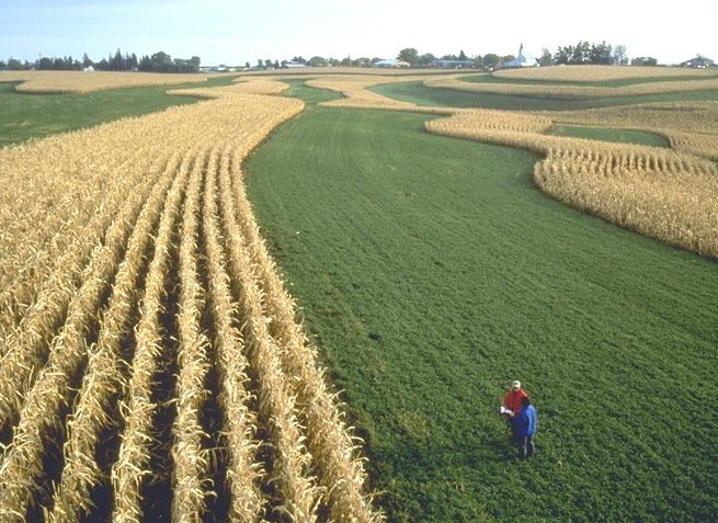 strip cropping: Planting regular crops and close-growing ...