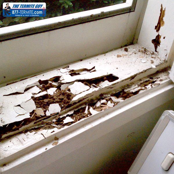 Subterranean Termite Damage To Window Sil Framing Wood Termites
