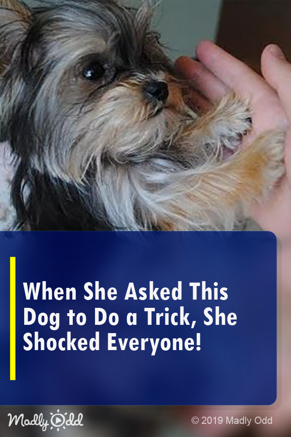 When She Asked This Dog to Do a Trick, She Shocked