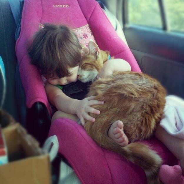 Image result for images of child with cat in car seat