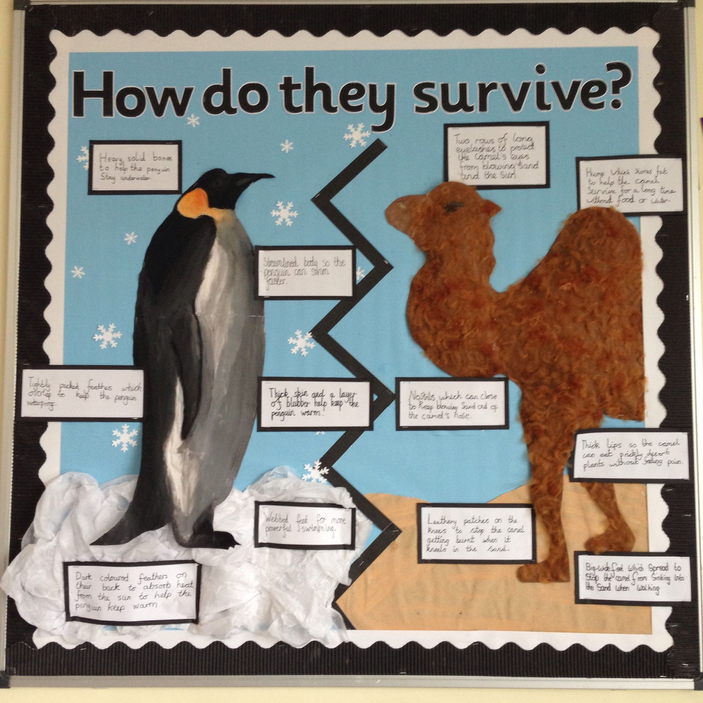 Animal Adaptation Science Display