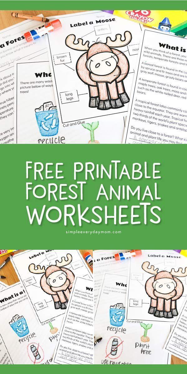 Free Printable Forest Animal Worksheets For Kindergarten ...