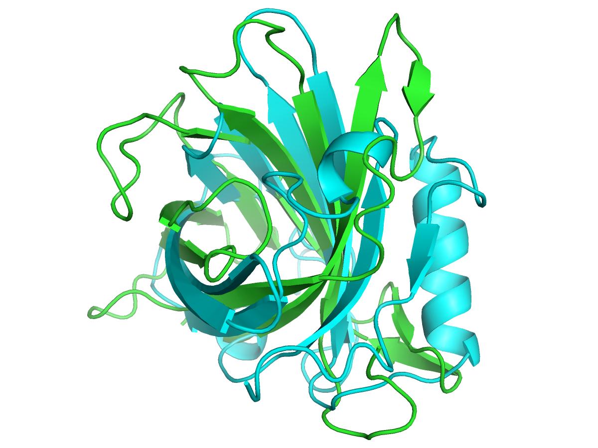 Pix For Globulin Structure Immune Response Steroids Molecules