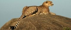 Best time to go to Tanzania - a safari guide | The Tanzania Specialists