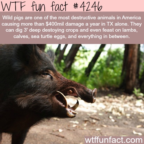 The most destructive animals in America - WTF fun facts | Mind ...