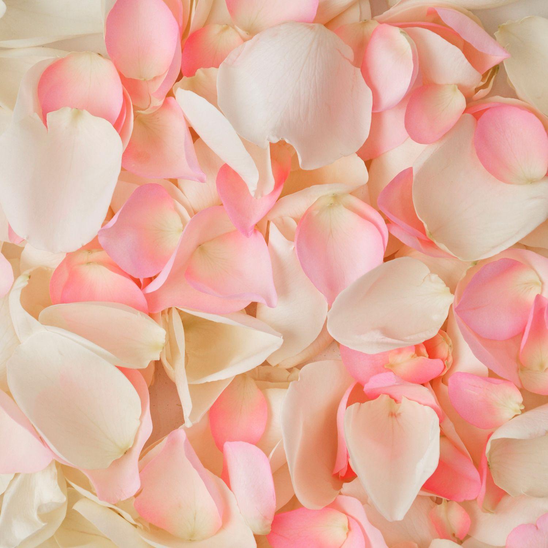 99 5 Bags5000 Rose Petals Pink And White Sams Club