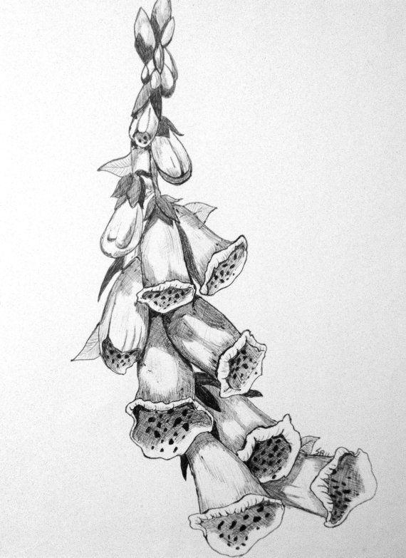 foxglove drawing google search tattoo inspiration