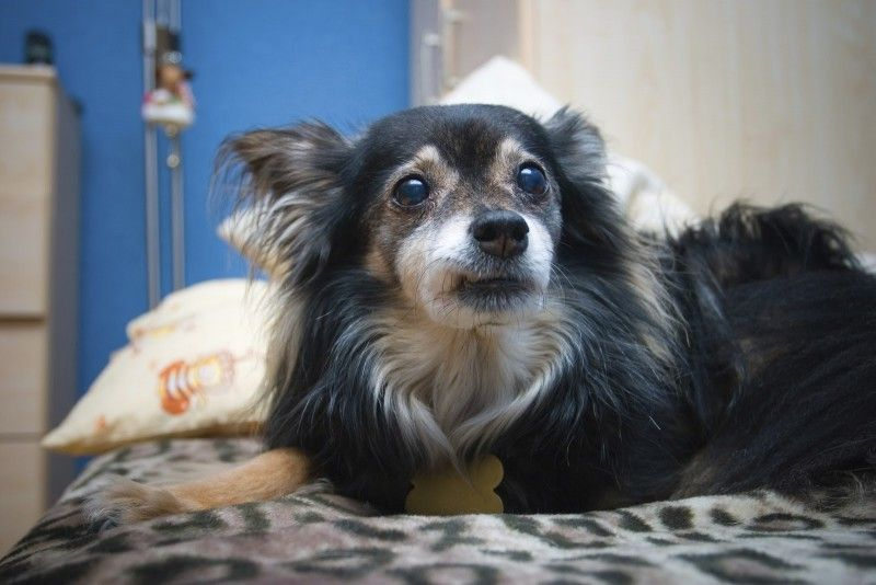 More Love To Give: Why Adopting A Senior Pet Is A Good Choice