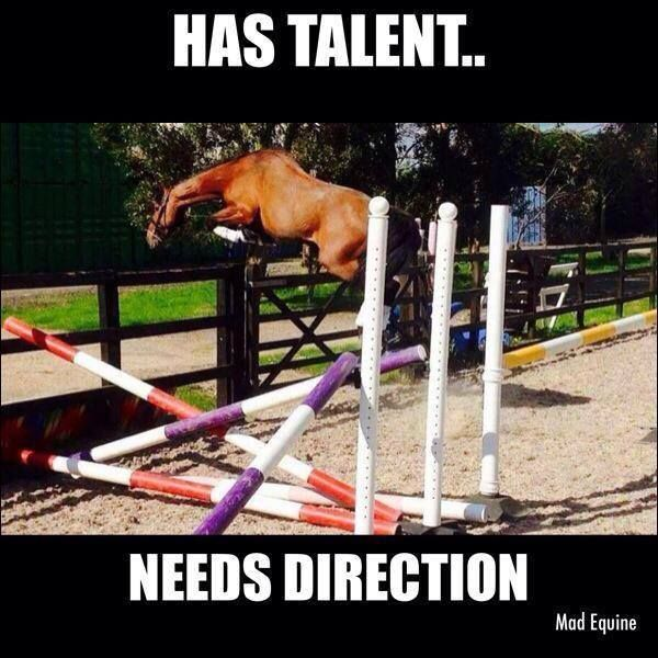funny , horse quote , has talent ,needs direction