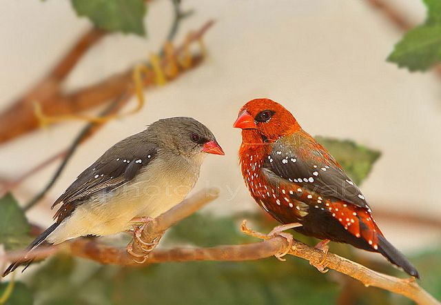 Pin On Yard Birds