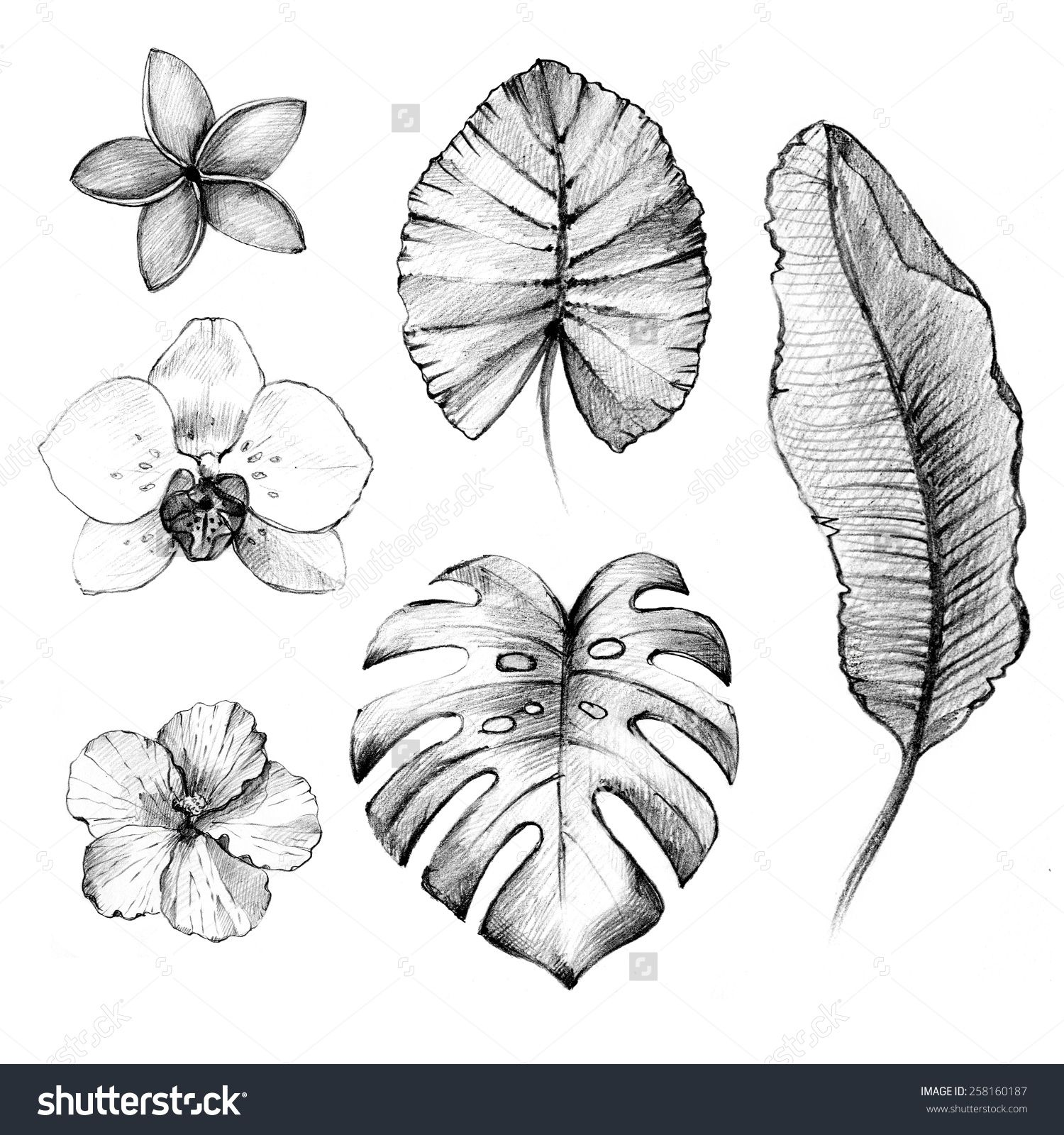 stock-photo-hand-drawn-tropical-flowers-and-plants-pencil-drawing ...