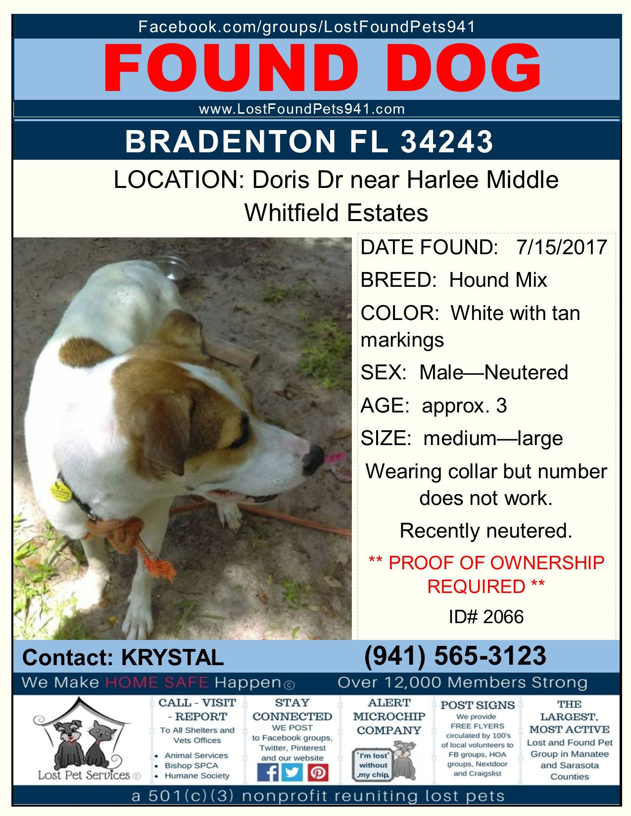 Do You Know Me Found Dog Missingpets Hound Mix Bradenton Fl 34243 Lostfoundpets941 Losing A Pet Pets Manatee County