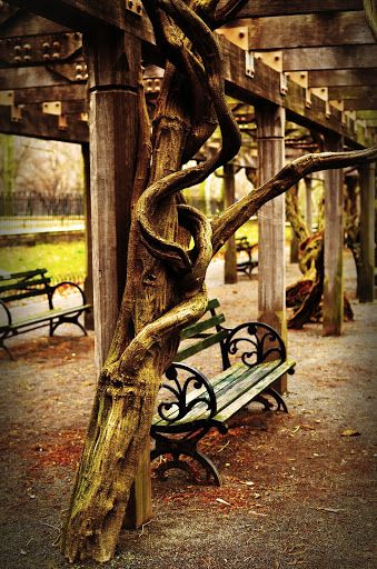 3 Unusual Things to do in Central Park | New York City | Central