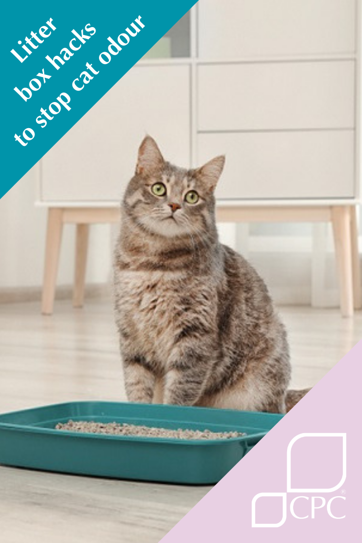 5 Litter box hacks to help stop cat odour in its tracks
