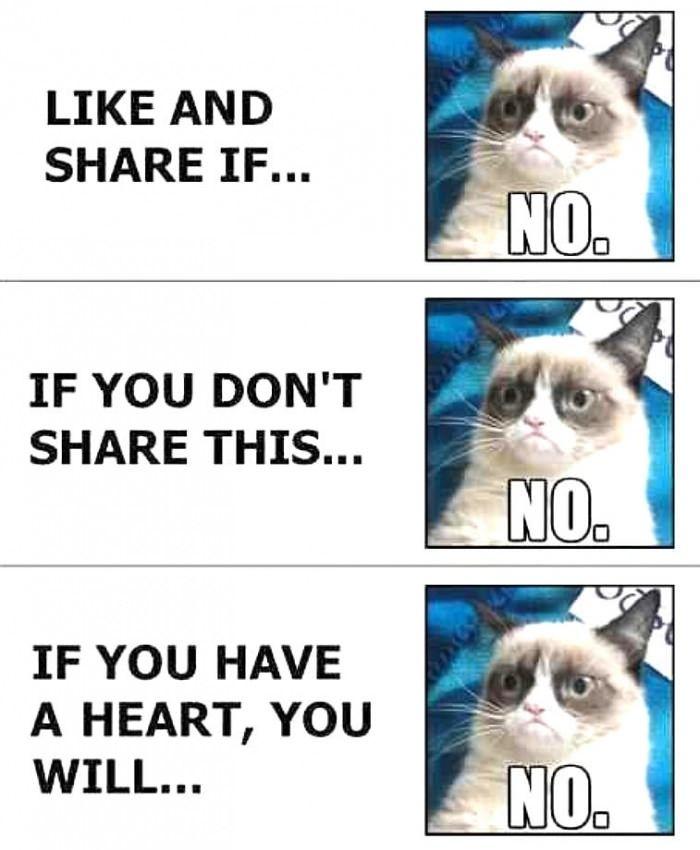 Me On Facebook Grumpy Cat Meme Grumpy Cat Funny Pictures