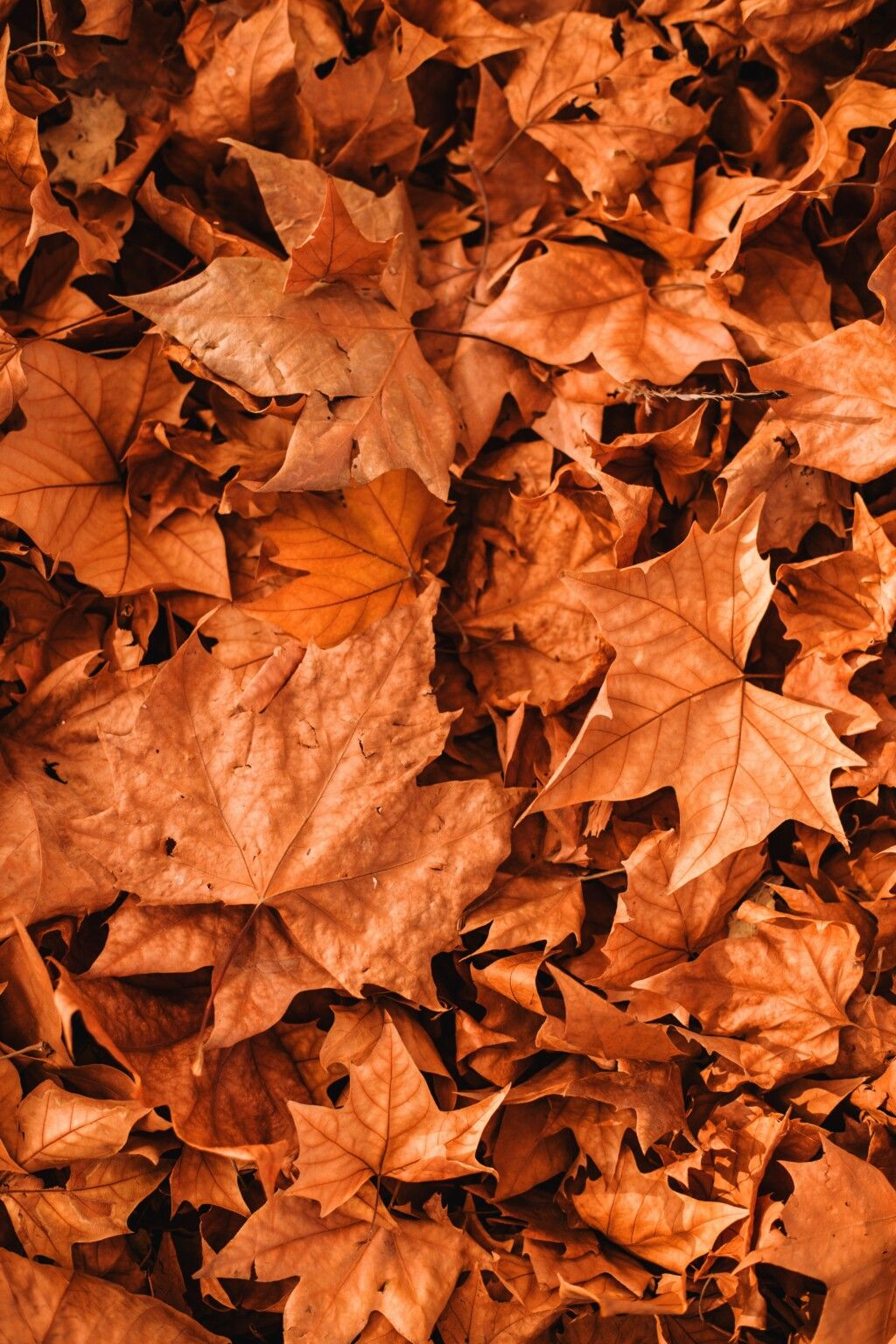 30+ Best Free Fall Wallpaper & Autumn Wallpaper Options For Your iPhone |