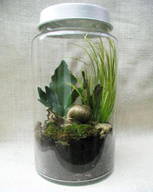 Snail Terrarium (with air holes) | Plant care, Little ...